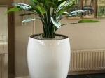 strelitia-in-jura-plantenbak