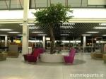 camelia-tree-schipol-airport-2