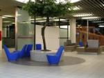 camelia-tree-schipol-airport