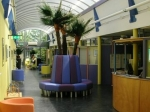 Preserved Palmenset