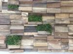 Moss wonder wall