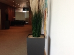 Large Grasses in Square Anthracite