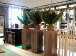 washingtonia-in-bespoke-wooden-planters