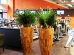 washingtonia-in-wood-planter