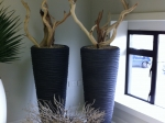 ghostwood-in-seaside-planter