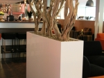 ghostwood-in-white-planter
