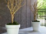 Manzanita- Wood