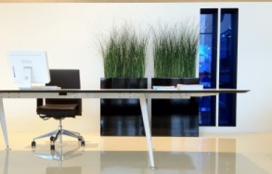 modern office scene with Mummie Plants grasses as decor