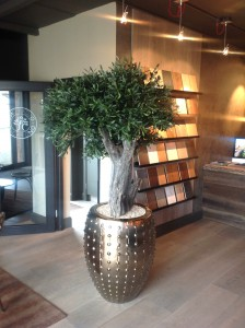 Olive Tree in Stylish Planter by Mummie Plants