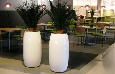 Business canteen with two phoenix plants in dubai planters