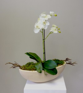 Artificial Silk Orchid (Single Stem), Preserved Moss & Branches, Ceramic Boat Planter